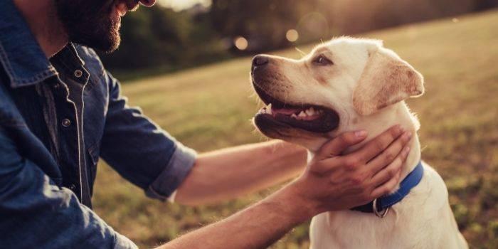 Wakacje z psem – najciekawsze miejsca dla Ciebie i Twojego przyjaciela